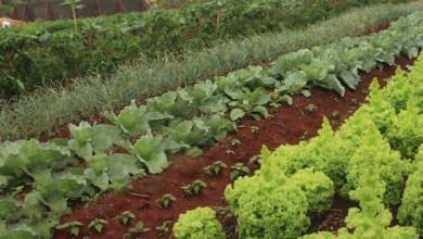 Photo of FAO aponta que produção global de alimentos precisaria aumentar 60% para garantir equilíbrio