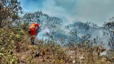 Photo of Fogo na Chapada: Incêndio continua a consumir Parque Estadual em Miguel Calmon