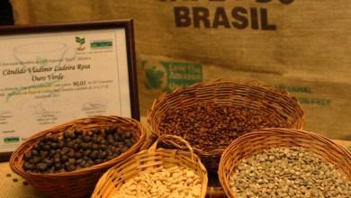 Photo of Café da região da Chapada Diamantina é destaque em leilão internacional