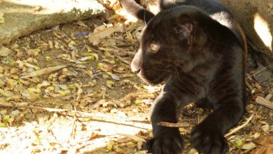 Photo of Salvador: Zoológico consegue sucesso na reprodução de 114 animais em 2015