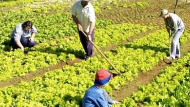 Photo of Chamadas públicas da SDR beneficiam mais de 40 mil agricultores familiares