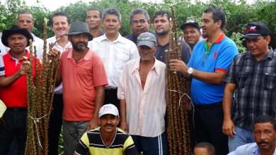Photo of Chapada: Agricultores de Marcionílio Souza recebem mudas sadias para plantio