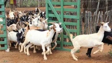 Photo of #Bahia: Agricultura familiar de Antônio Cardoso recebe investimentos de mais de R$ 1 milhão