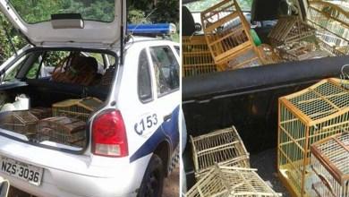 Photo of Chapada: Mais de 60 pássaros são libertados no município de Jacobina