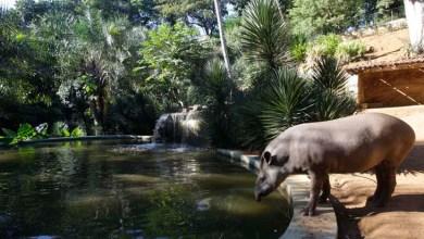 Photo of Rui Costa determina reabertura do Zoológico de Salvador a partir deste sábado