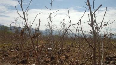 Photo of Municípios da Chapada Diamantina entre os 140 que tiveram situação de emergência decretada contra a estiagem