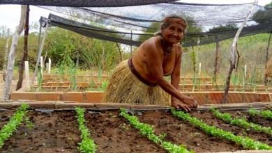 Photo of Governo da Bahia implementa ações específicas para comunidades indígenas