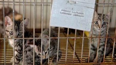 Photo of Chapada: Ministério Público recomenda implantação de Centro de Zoonoses em Jacobina