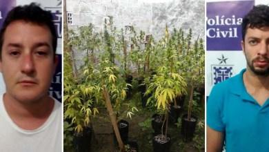 Photo of Bahia: Engenheiro e empresário cultivavam maconha clonada em Cruz das Almas