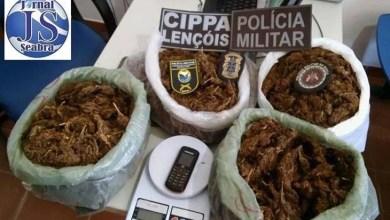 Photo of Chapada: PM apreende oito quilos de maconha no município de Lençóis