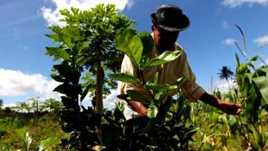 Photo of Bahia espera receber 800 mil cadastros ambientais rurais