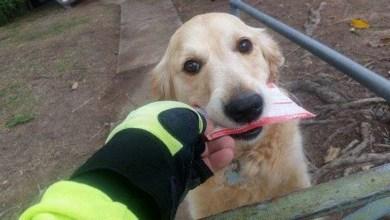Photo of Mundo: Amizade entre carteiro e cadela australianos conquista internautas
