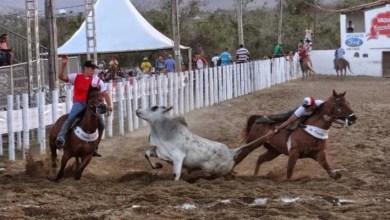 Photo of Sanciona lei que torna vaquejada manifestação e patrimônio cultural no Brasil