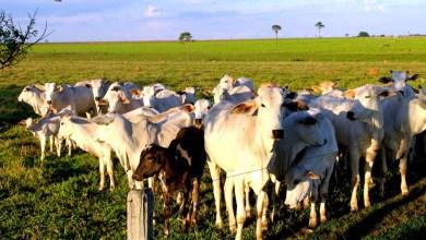 Photo of Impacto da produção de carne bovina no clima leva a recomendação de diminuição do consumo