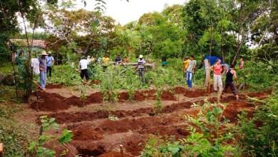 Photo of Chapada: Prática de sistemas agroflorestais acontece no Vale do Capão no final de março