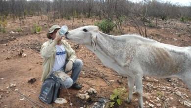 Photo of Resolução autoriza que bancos renegociem dívidas de produtores rurais atingidos pela seca