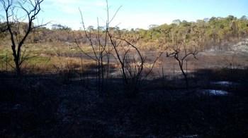 Fogo na região de Morro do Chapéu - FOTO Jaime 6