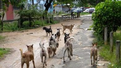 Photo of #Brasil: Câmara dos Deputados aprova regras de controle populacional de cães e gatos