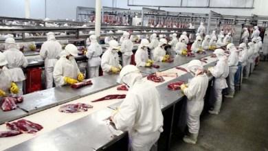 Photo of Exportação de carne cresce 4,4% em março mesmo com operação da Polícia Federal