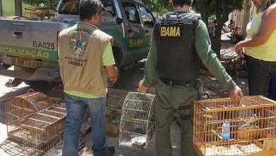 Photo of Chapada: Mais de 290 animais são resgatados durante operação conjunta em Ipupiara