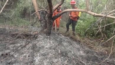 Photo of Chapada: Fogo na APA do Marimbus é debelado com ajuda de brigadistas voluntários