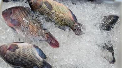 Photo of #Bahia: Pescadores venderão peixe mais barato às vésperas da Semana Santa