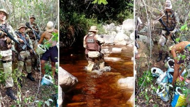 Photo of Chapada: Plantação de maconha é erradicada pela Cipe em área de difícil acesso em Palmeiras