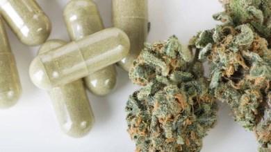 Photo of Justiça determina que União inclua na lista do SUS medicamentos à base de Cannabis registrados pela Anvisa