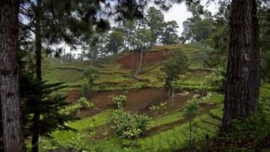 Photo of Excesso de químicos prejudica solos e agricultura em todo o mundo, diz ONU
