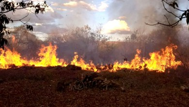 Photo of #Bahia: Fogo atinge vegetação às margens de BR na região do município de Barreiras