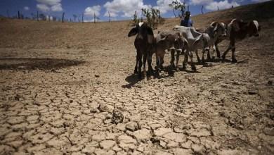 Photo of #Especial: Pesquisa revela maior aridez em toda Bahia; a tendência é que a situação se agrave