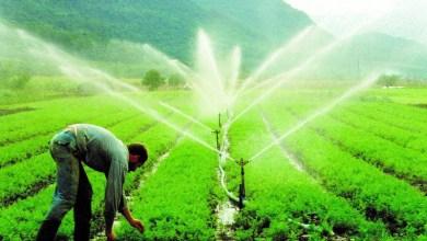 Photo of Chapada: Governo estadual vai recuperar sistema de irrigação do município de Várzea da Roça