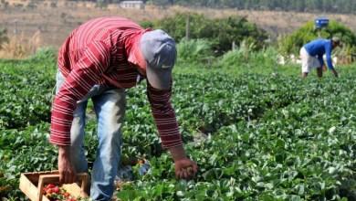 Photo of Chapada: Palestra gratuita sobre ofertas de crédito para agricultores familiares será na terça em Lençóis