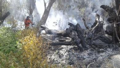 Photo of Chapada: Cifa quer plano de prevenção e controle de incêndios; reunião em Andaraí define atuação