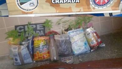 Photo of Chapada: Suposto traficante é preso pela Cipe com maconha e arma na zona rural de Iraquara