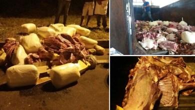 Photo of #Bahia: Operação da SSP, Adab e PRF apreende 3,5 toneladas de carnes entre Salvador e Feira de Santana