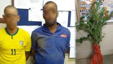Photo of Chapada: Cipe destrói plantação de maconha e prende dupla na zona rural de Ibitiara