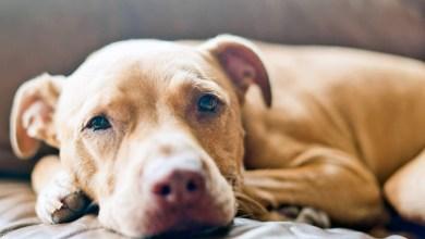 Photo of Chapada: Surto de doença canina preocupa moradores do Vale do Capão