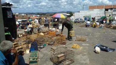 Photo of #Bahia: Operação da Polícia Militar apreende 358 aves silvestres em Feira de Santana
