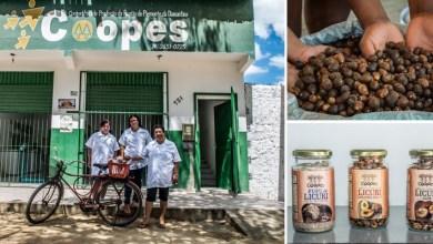 Photo of Cooperativas baianas vão a evento na Itália que reúne produtores de alimentos de 160 países