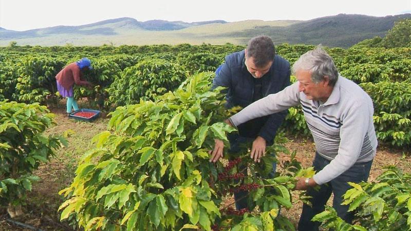 Cafés produzidos na Chapada Diamantina encantam consumidores de outros países
