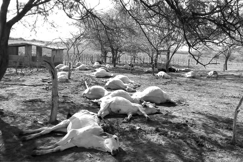 Chapada: Adab confirma intoxicação alimentar como causa da morte de rebanho em Tanhaçu
