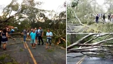 Photo of Chapada: Chuvas e ventos fortes derrubam 60 árvores em estrada na região de Andaraí