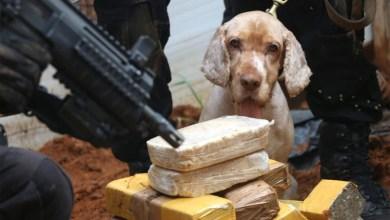 Photo of #Bahia: Polícia baiana desmonta esquema que movimentava R$ 2 milhões em drogas por mês
