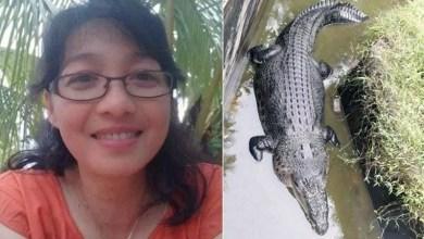 Photo of #Mundo: Crocodilo de 5 metros devora cientista que tentou alimentá-lo na Indonésia
