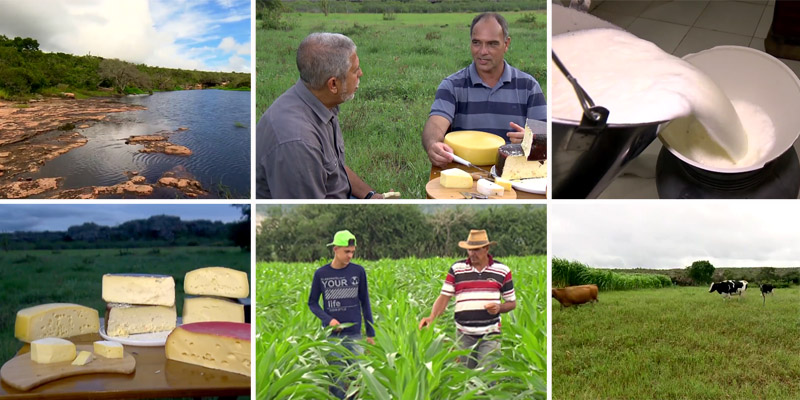 Chapada: Produção de alimentos finos em Morro do Chapéu é tema de reportagem do Globo Rural