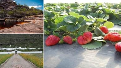 Photo of Chapada: Produtores de 60 comunidades do município de Mucugê vão desenvolver plano agroecológico