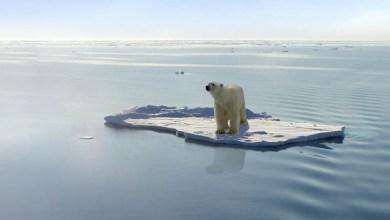 Photo of #Mundo: Relatório da ONU comprova destruição de espécies de animais e vegetais de forma acelerada