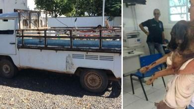 Photo of #Bahia: Homem de 61 anos é preso suspeito de arrastar cão em carro e manter filhos em situação de abandono