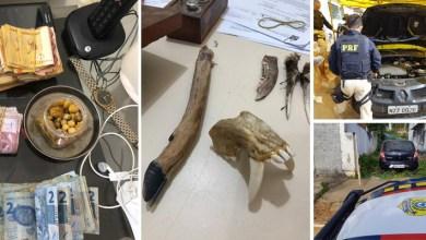 Photo of Chapada: Onze pessoas são presas e quase 300 animais silvestres resgatados em três dias de FPI em Jacobina